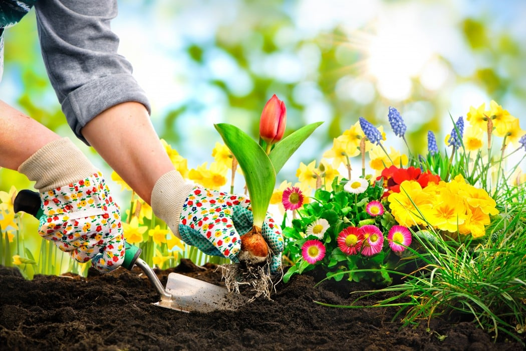 Planting services in London