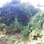 General Garden Maintenance in North West London, Golders Green